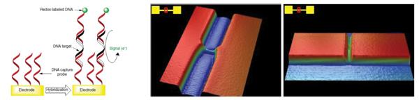 Nano-gap DNA sensors.