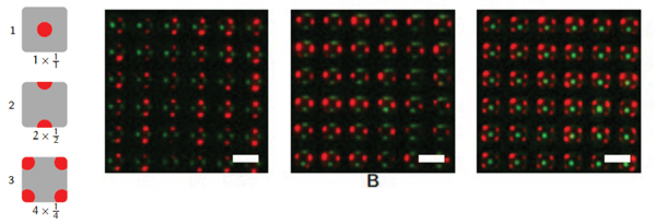 Fluorescence images of multi patterns fabricated with pyramidal PDMS stamp.