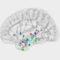 El hipocampo orquesta el proceso cerebral que nos permite evocar un recuerdo