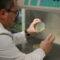 Identificado un mecanismo que explica la recurrencia de muchas infecciones pulmonares
